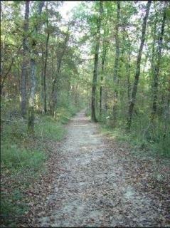 La Forêt de Bouconne