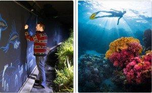 corail-cooeur-de-vie-aquarium-de-paris