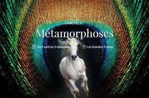 Métamorphoses : un spectacle à voir !